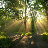 Sunny light. Sun rays in the morning in wood Royalty Free Stock Images