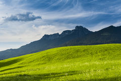 Sunny lush green meadow. On the foothills of arugged mountain range, scenic background of natural beauty Royalty Free Stock Photos