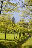 Nice park in Lower Garden of Peterhof Royalty Free Stock Photography