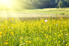 Sunny meadow Stock Images