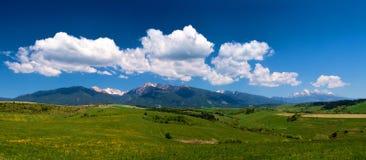 Sunny Meadow Fotografie Stock