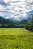 Sunny meadow in the Alps. With snowcapped mountains in the background Stock Photos