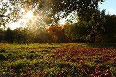 Sunny Meadow - Apfelgarten Lizenzfreies Stockfoto
