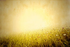 Sunny meadow background Royalty Free Stock Photos