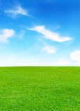 Sunny meadow and blue sky Royalty Free Stock Photo