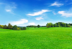 Sunny meadow and blue sky Stock Photography