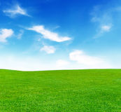 Sunny meadow and blue sky royalty free stock photography
