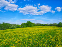 Sunny meadow. Bright spring day Stock Image