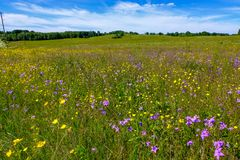 Sunny meadow with dandellions and daisies. In summer at countryside stock photos