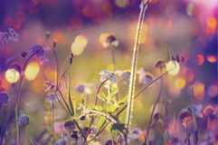 Sunny meadow Royalty Free Stock Image