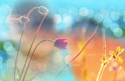 Sunny meadow. Sunny day in the meadow Stock Image