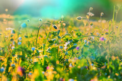 Sunny meadow. Sunny day in the meadow royalty free stock photography