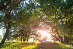 Sunny meadow Royalty Free Stock Photo