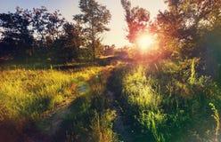 Sunny meadow Stock Photography