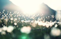 Sunny meadow Royalty Free Stock Images