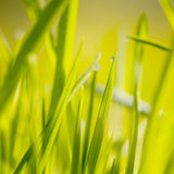 Sunny meadow with drop stock photography