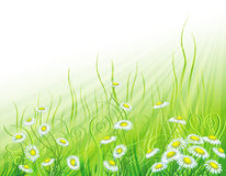 Sunny meadow with flowers Stock Photos