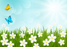 Sunny meadow. With flowers and butterflies Stock Photography