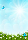 Sunny meadow Royalty Free Stock Photography