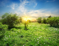 Sunny meadow with flowers Royalty Free Stock Photography