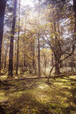 Sunny meadow in the forest. Alpine forest at an altitude of over 2,000 meters Stock Photos