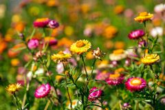 Sunny meadow grass and flowers Stock Photos