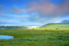 Sunny meadow and lake. Africa. Kenya. Lake Nakuru stock photos