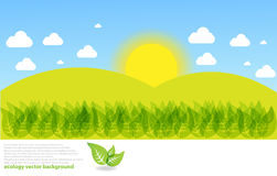 Sunny Meadow landscape  background Stock Photography