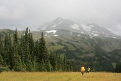 Sunny Meadow in Singing Pass Stock Image