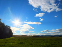 Sunny meadow. Stock Images