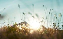 Sunny meadow stock photos