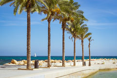 Sunny Mediterranean beach, promenade with palm trees, Torrevieja Royalty Free Stock Images
