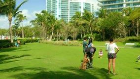 Sunny Miami-Strandhundeparkvideo stock footage