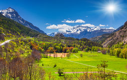 Sunny morning in alpine meadows. Stock Images