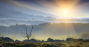 Sunny morning 1. Beautiful sunrise with a lonely tree in the foggy mountain valley stock photos