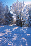 Sunny morning of Christmas Royalty Free Stock Photography