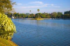 Sunny morning on the city lake. Kandy. Sri Lanka. Sunny morning on the city lake. Kandy, Sri Lanka royalty free stock images