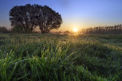 Sunny Morning In The Countryside Royalty-vrije Stock Foto
