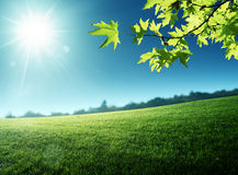 Sunny morning and field of grass Royalty Free Stock Photography