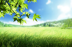 Sunny morning and field of grass Stock Images