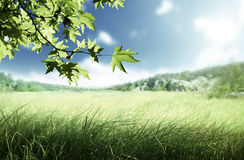Sunny morning and field of grass Royalty Free Stock Image