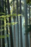 Sunny morning in the forest. Back-light Royalty Free Stock Images