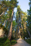 Sunny morning forest. Nature park stock photography
