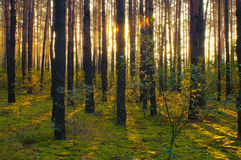 Sunny morning. Freshing sunny morning in the forest Stock Images