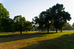 Sunny morning on a golf course Stock Images