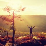 Sunny morning. Happy hiker with hands in the air stand on rock bellow pine tree. Misty and foggy morning valley. Stock Image