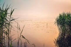 Sunny morning landscape. Sunrise over the foggy lake stock image