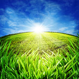 Sunny morning on the meadow Royalty Free Stock Image