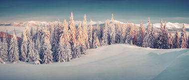 Sunny morning panorama in the winter mountain Royalty Free Stock Images