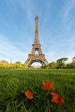 Sunny morning in Paris and Eiffel Tower with maple leaf at Paris Royalty Free Stock Photo